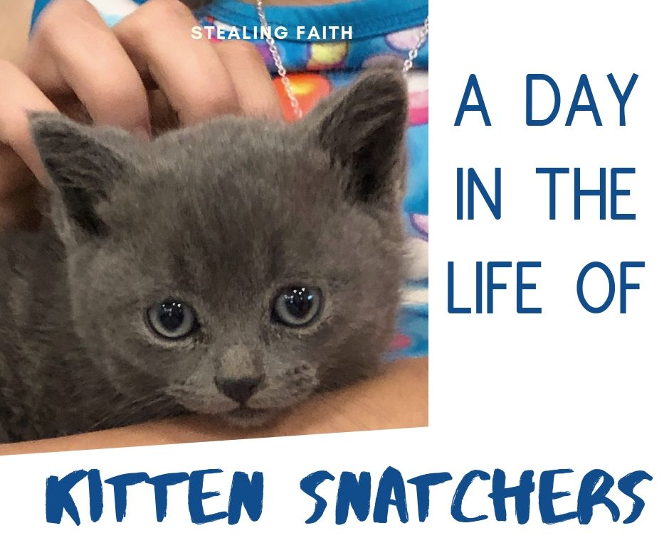 A Day in the Life of Kitten Snatchers