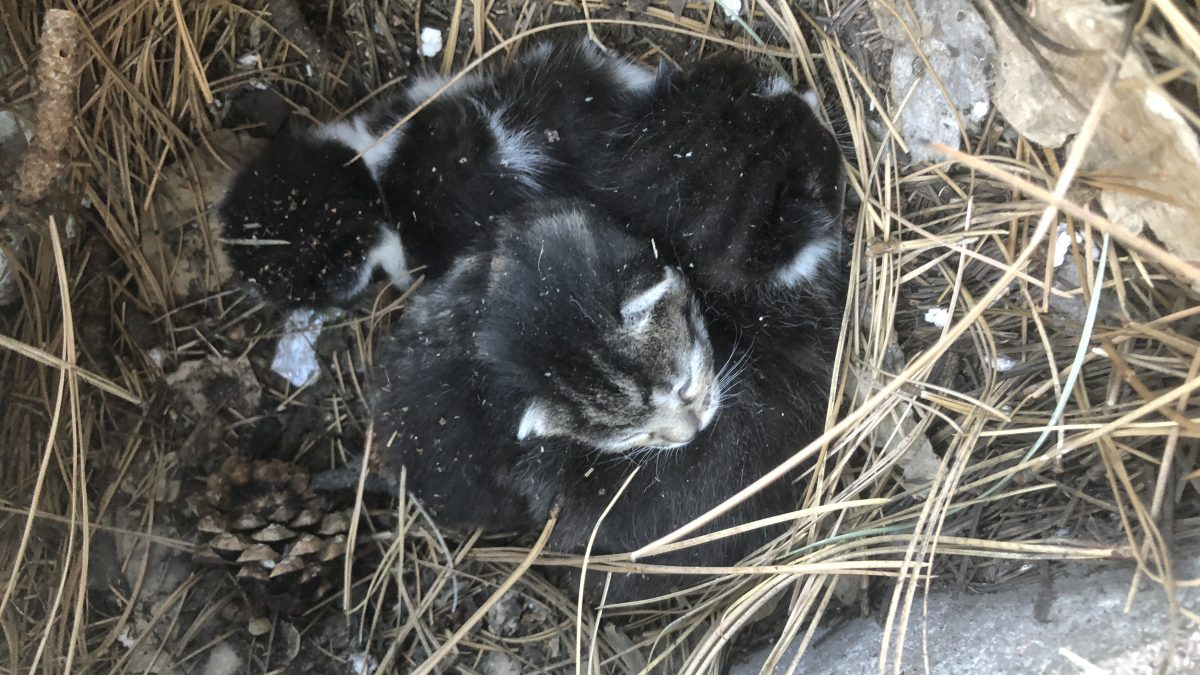 Woodpile kittens